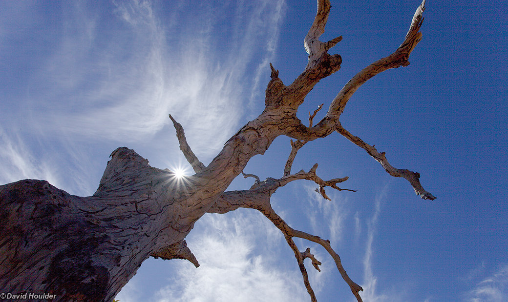 Dead Tree and Cirrus  Watarrka National Park