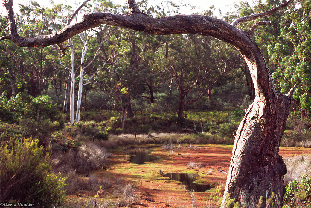Tree and wetland, Maria Island