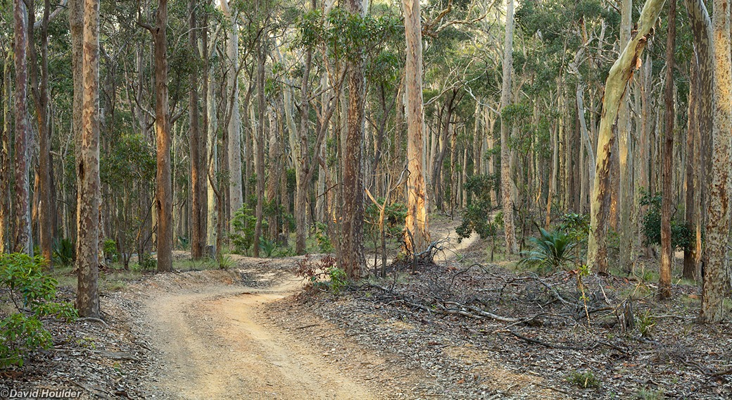 Spotted Gum forest