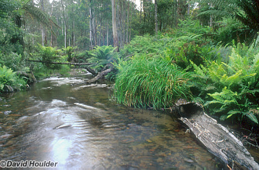 East Gippsland creek