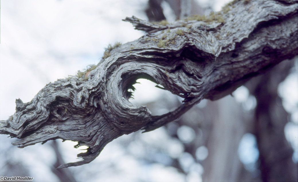 Dragon branch