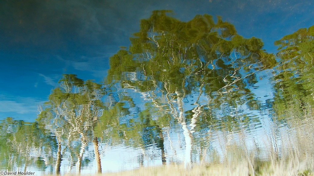 Reflected Trees